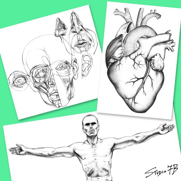 illustrazioni - grafiche anatomiche